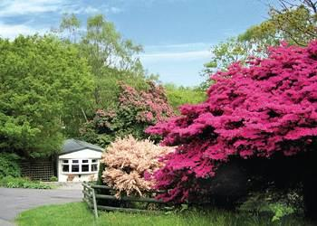 Woodland Elm