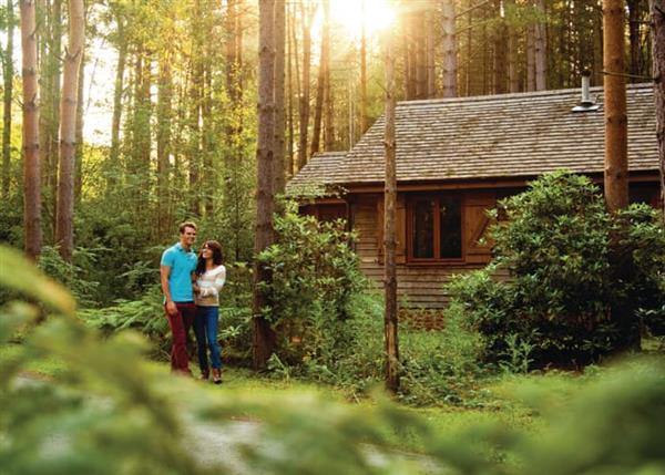 Lodge Escape Griffon Forest, North Yorkshire