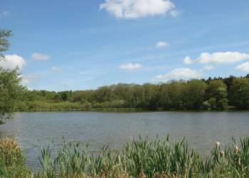 Relax and Explore Haveringland Hall Country Park, Norfolk