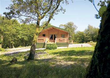 Buzzard Lodge