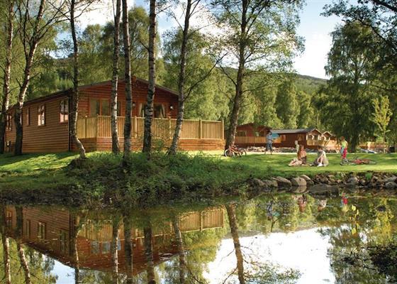 Cedar WFA at Tummel Valley, Pitlochry