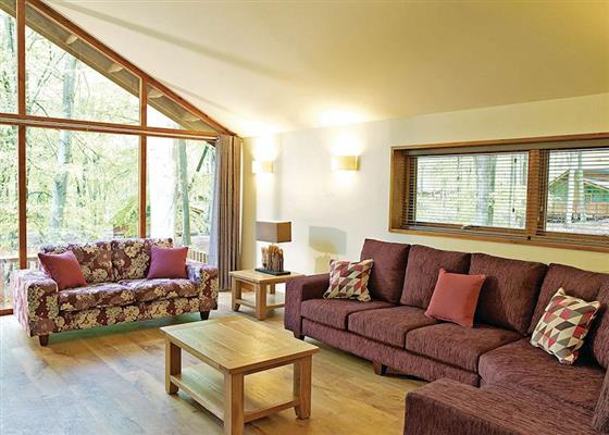 Copper Beech 3 at Blackwood Forest Lodges, Winchester