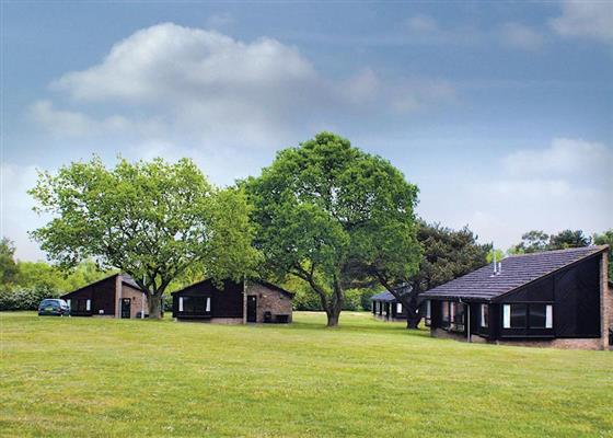 Dunston at Bainland Country Park, Woodhall Spa