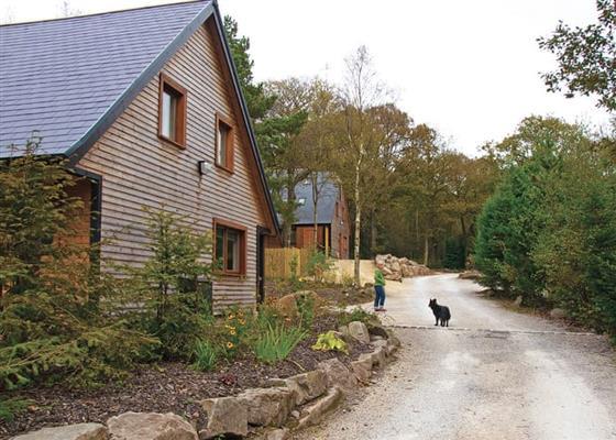 Farley at Ramshorn Estate Woodland Lodges, Stoke-on-Trent