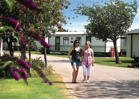 Gannet at Manor Park Holiday Village, Hunstanton