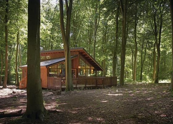 Golden Oak 1 (Pet) at Blackwood Forest Lodges, Winchester