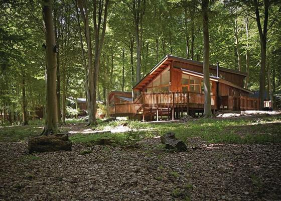 Golden Oak 3 (Pet) at Blackwood Forest Lodges, Winchester