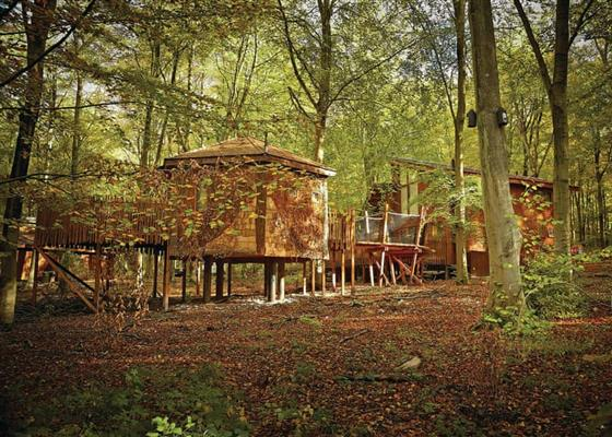 Golden Oak Tree House (Pet) at Blackwood Forest Lodges, Winchester