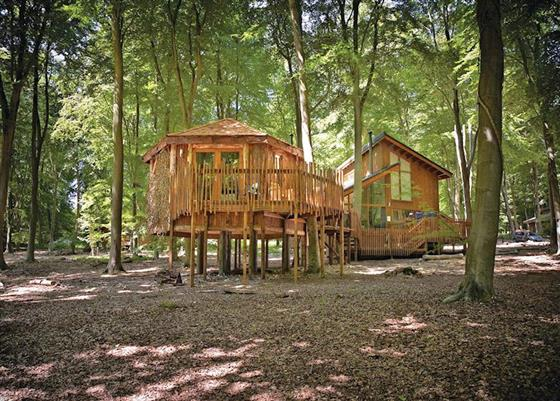Golden Oak Treehouse at Thorpe Lodges, Thetford