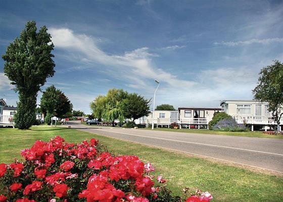 Goosander at Manor Park Holiday Village, Hunstanton