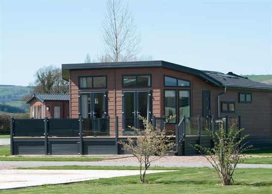 Peregrine at Maesmawr Farm Resort, Caersws