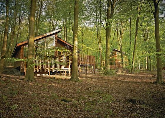 Silver Birch 2 WF at Blackwood Forest Lodges, Winchester