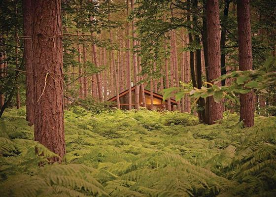 Silver Birch 2 WF at Sherwood Forest Lodges, Mansfield