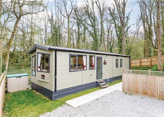 Silver Birch 3 (Pet) at Castle Brake Holiday Park, Exeter