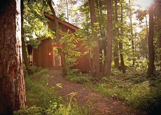 Silver Birch 3 (Pet) at Sherwood Forest Lodges, Mansfield