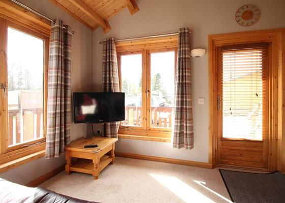 Yew at Castlewood Lodges, Banchory